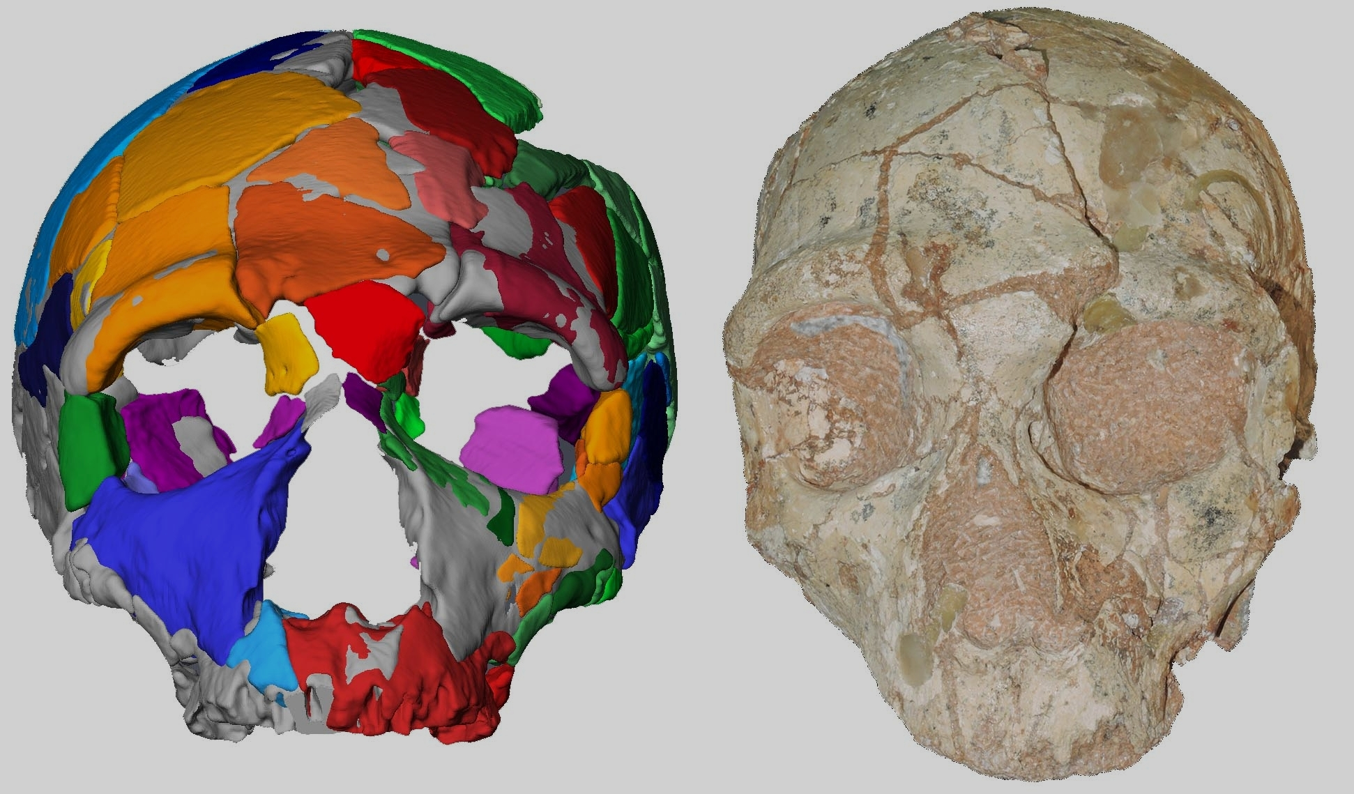 The Apidima 2 cranium and its reconstruction