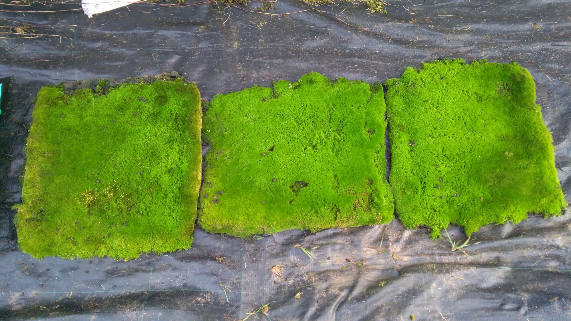 Carpets of moss help stop erosion