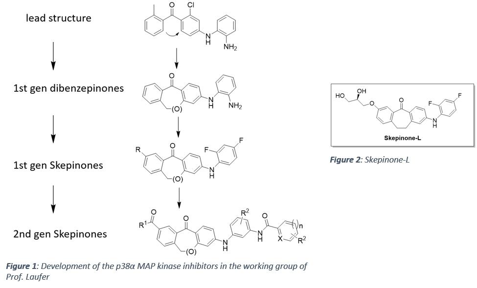 p38α MAP kinase inhibition   Universität Tübingen on jak-stat signaling pathway, mapk/erk pathway, cyclic adenosine monophosphate, tgf beta signaling pathway, signal transduction, protein kinase, notch signaling pathway, receptor tyrosine kinase, wnt signaling pathway, cyclin-dependent kinase, pi3k/akt/mtor pathway, protein kinase c, adenylate cyclase, c-jun n-terminal kinases,