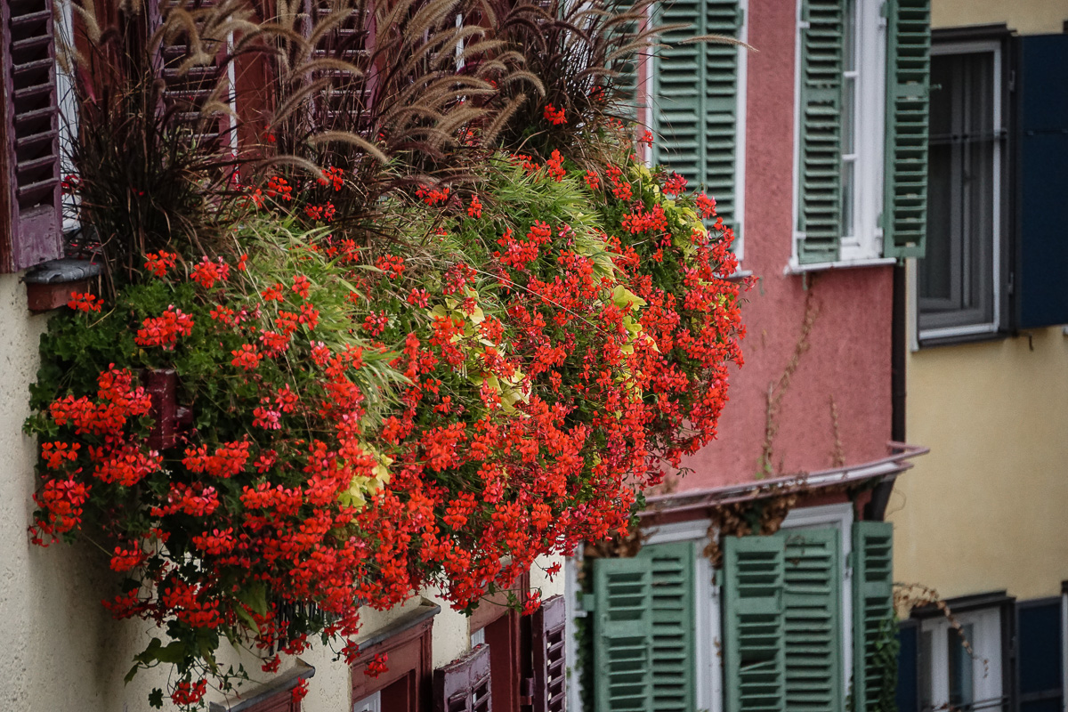 Red flowers in front of the windows of a house in the old town